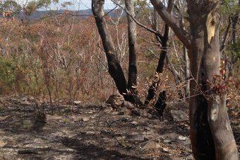 Observed Bush Fire Damage