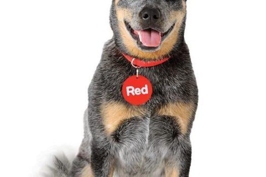 Get 5% off Car Rental with Redspot